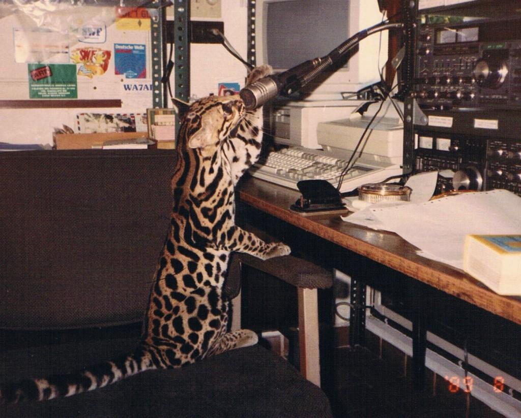Radio Ozelot