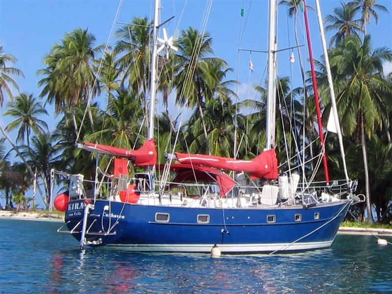Eastern Coco Bandero - Kira an der Palme .JPEG
