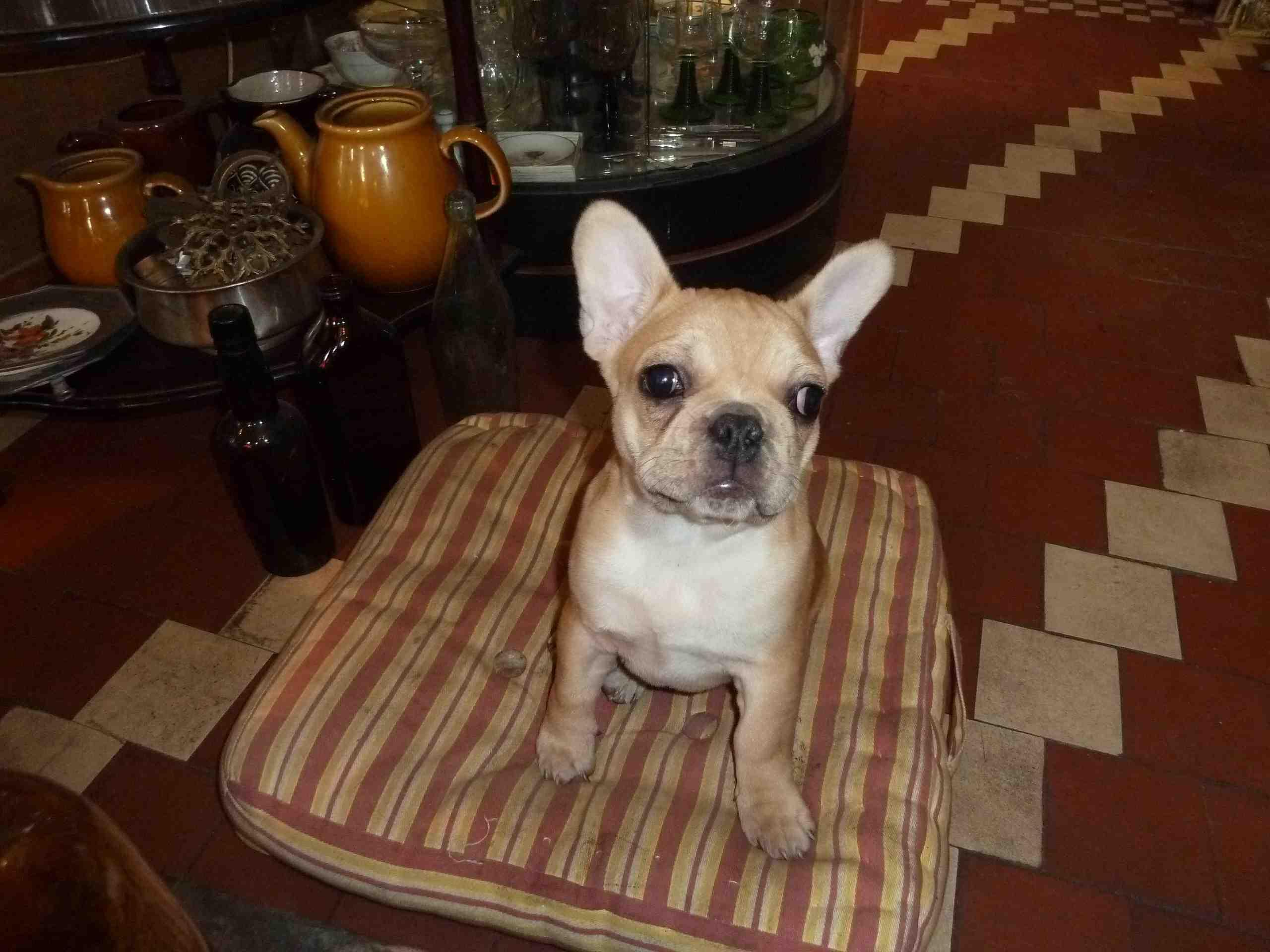 Warschkowo Hund 2