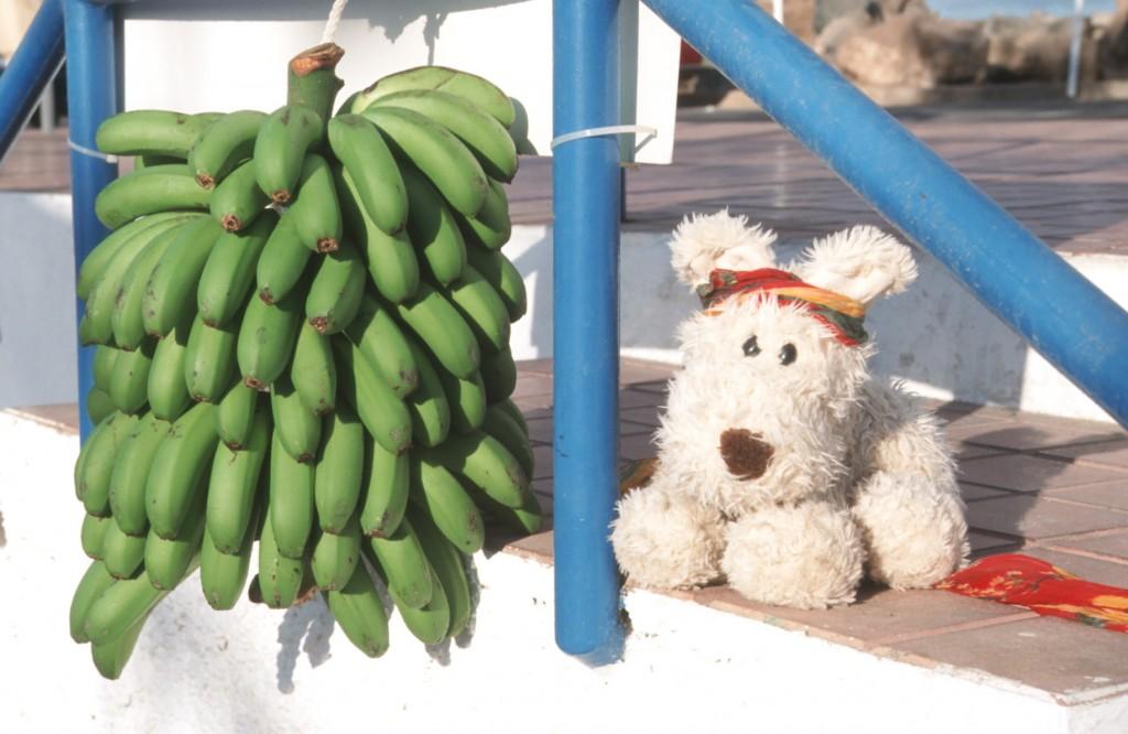 Schnuff Banaane Kopie