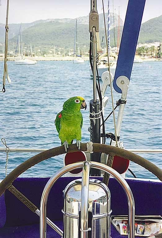 #12 Papagei Kopie 2