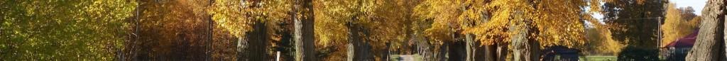 Herbst#3