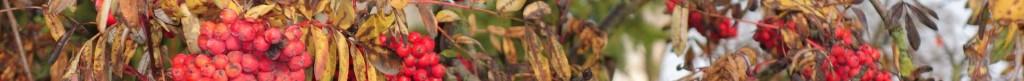 Herbst#4