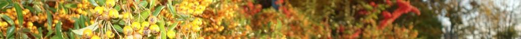 Herbst#8
