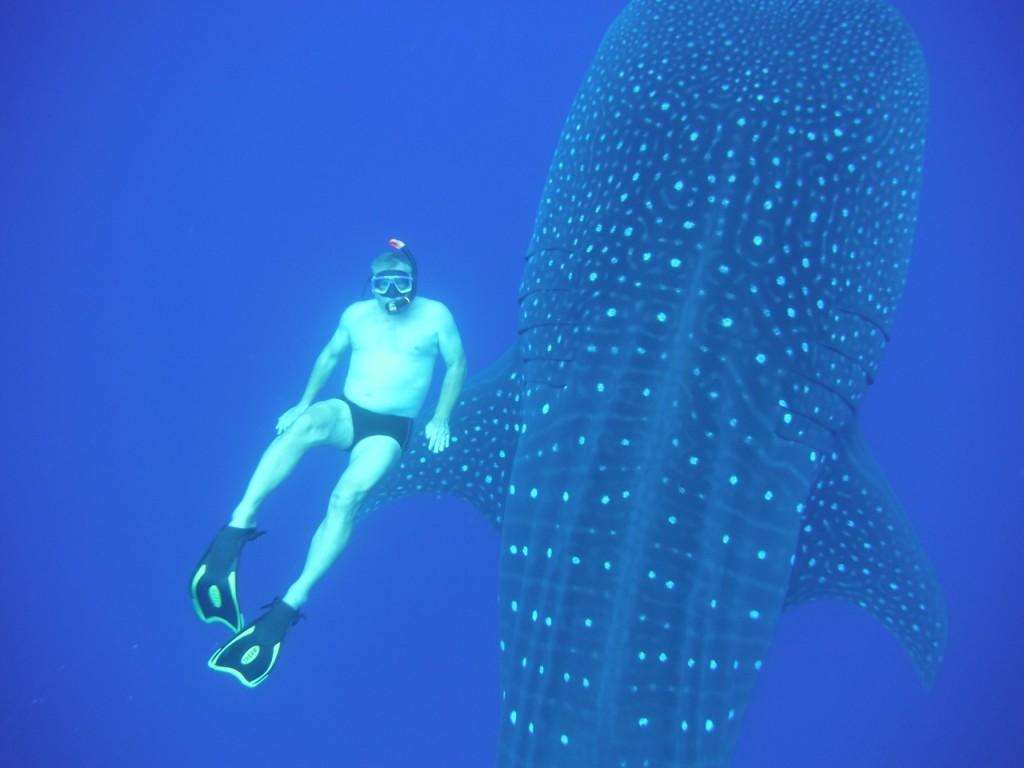 Vlado und der Hai Kopie
